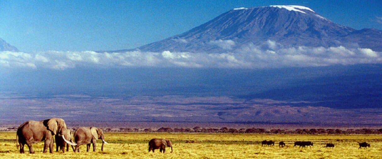 Kai's Kilimanjaro Quest